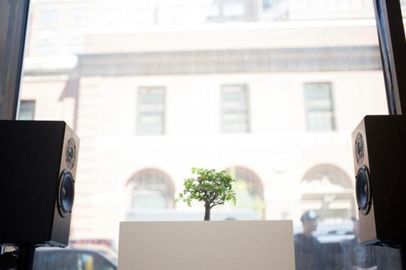 rbma-nyc-2013-art-plants